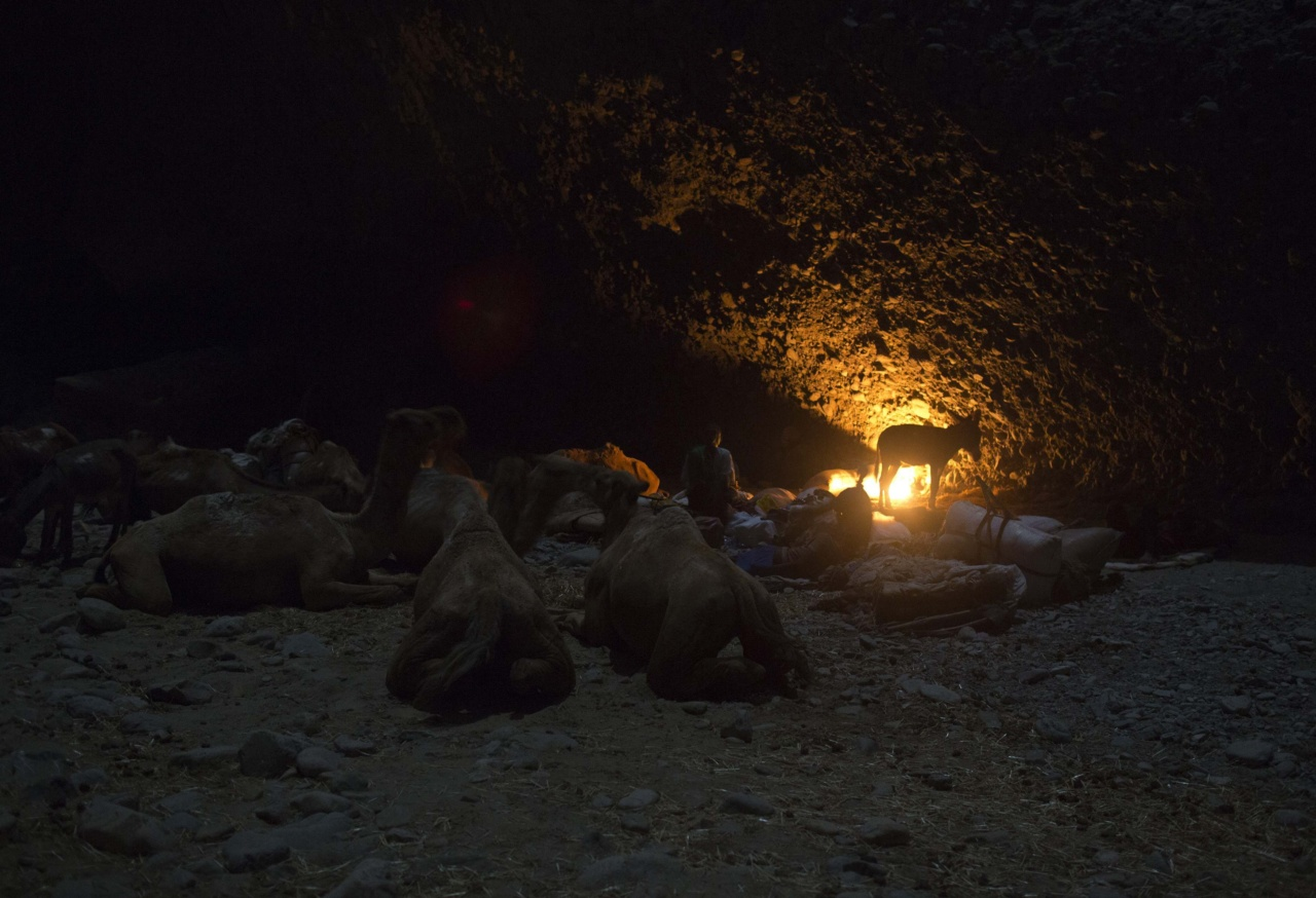 Salt merchants, and their pack animals, rest for the night in a canyon, during their journey to extract salt from the Danakil Depression, northern Ethiopia