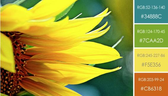 сочетание цветов в графическом дизайне