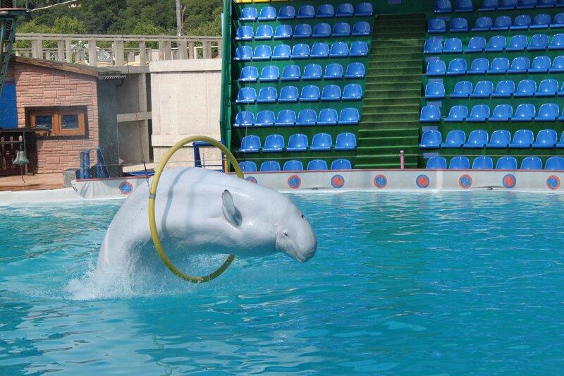 белые киты