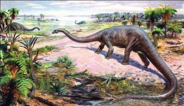 картинка про эволюцию.jpg