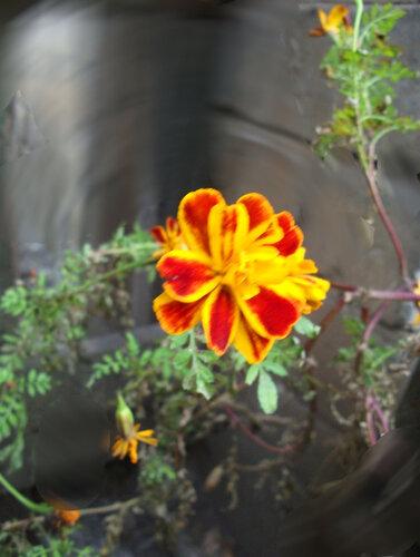 Прощальные цветы лета