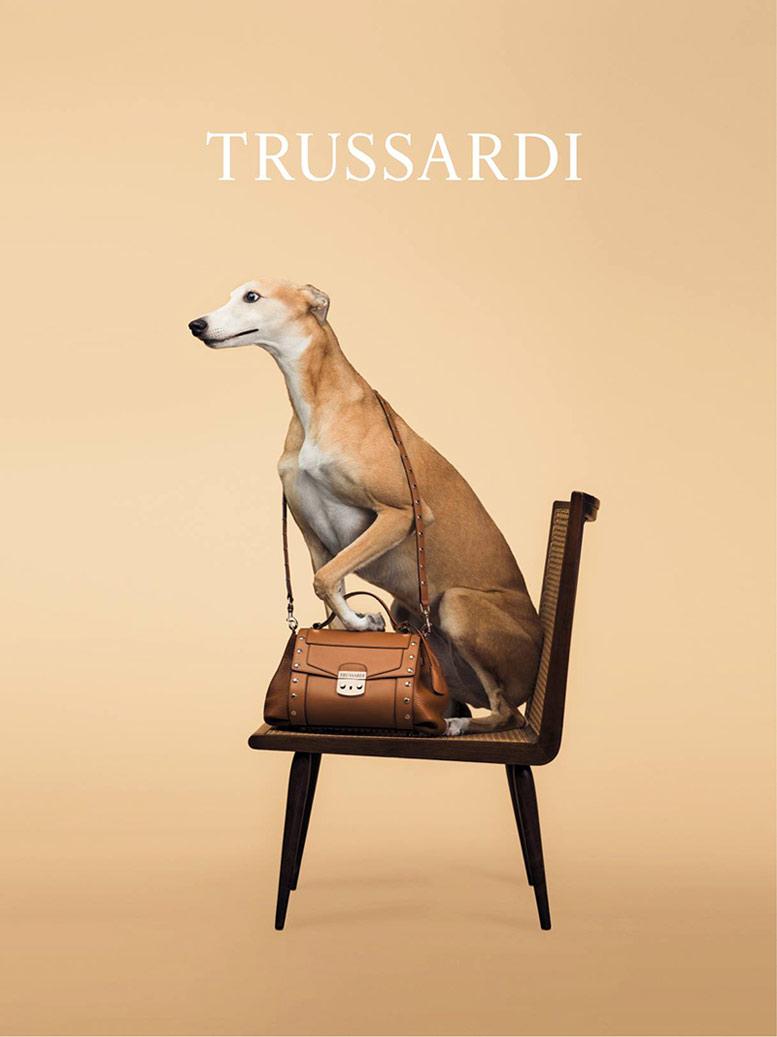 Собаки в роли фотомоделей в рекламной кампании модного бренда Trussardi SS 2014 / фотограф William Wegman