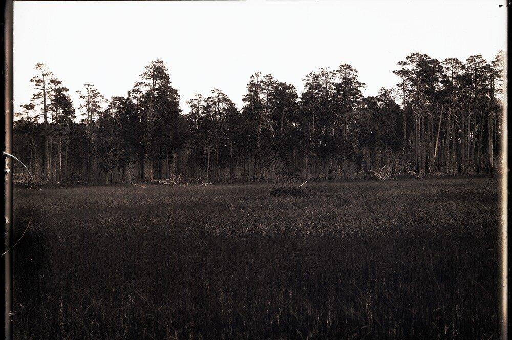 Село Болчаровское. Болото в лесу
