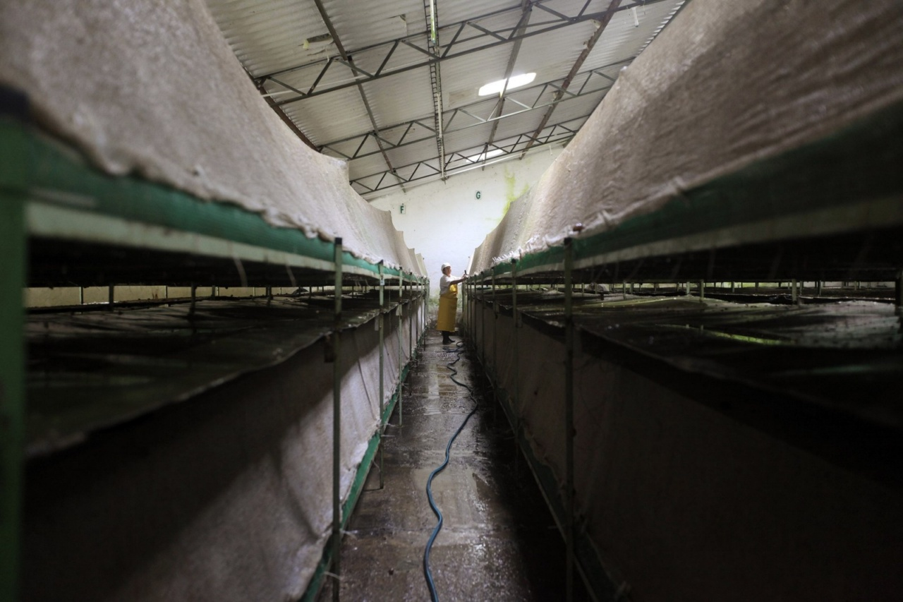 A worker washes panels where snails (Helix Aspersa) are fed in a farm near Choachi