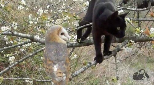 Удивительная дружба совы и кошечки