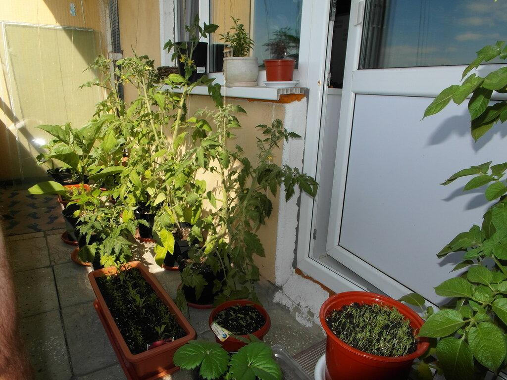 Овощи на балконе своими руками 777