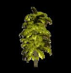Palms  (45).png