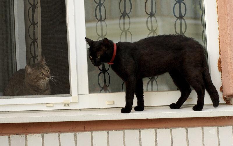 Разборки в кошачьем квартале