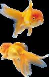 рыба (12).png