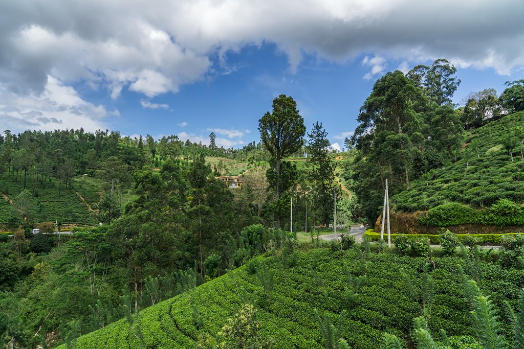 Нувара Элия Шри-Ланка