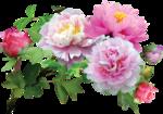 Holliewood_SpringFaeries_Flowers2.png