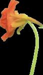 Holliewood_SpringFaeries_Flowers17.png