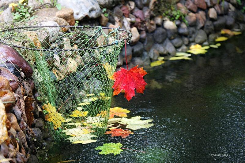 Дождливая осень 2013
