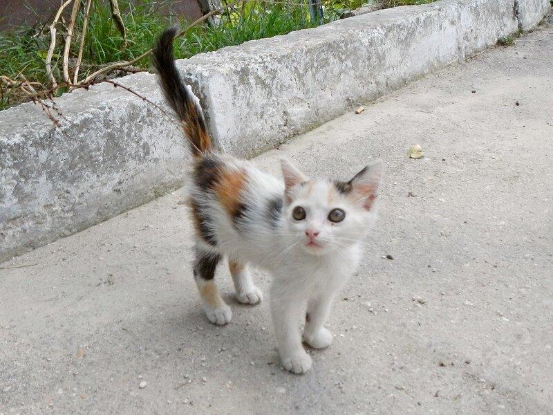 Котёнок в поселке Красный Мак