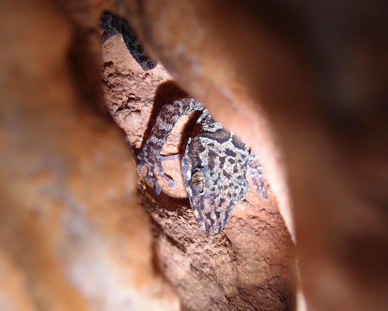 Пещерный ящер