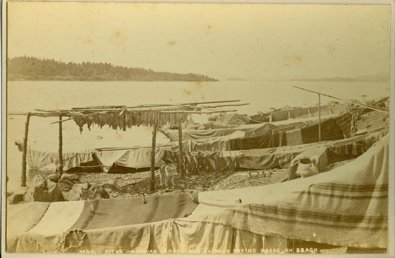 1886. Ситка. Индейские каноэ и рыба