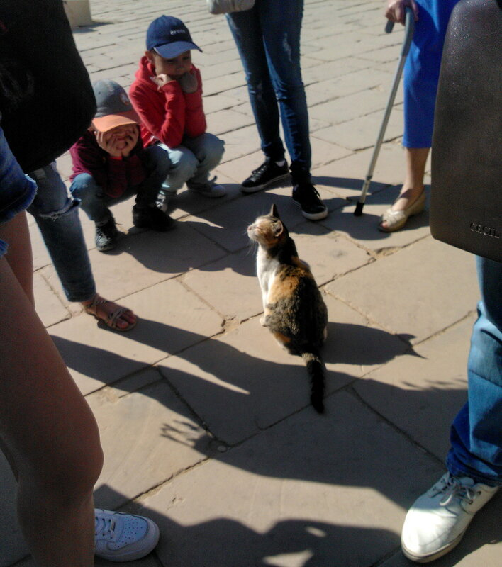 Луксорский кот