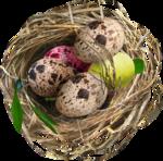MRD_EggStraSE_eggs-nest.png