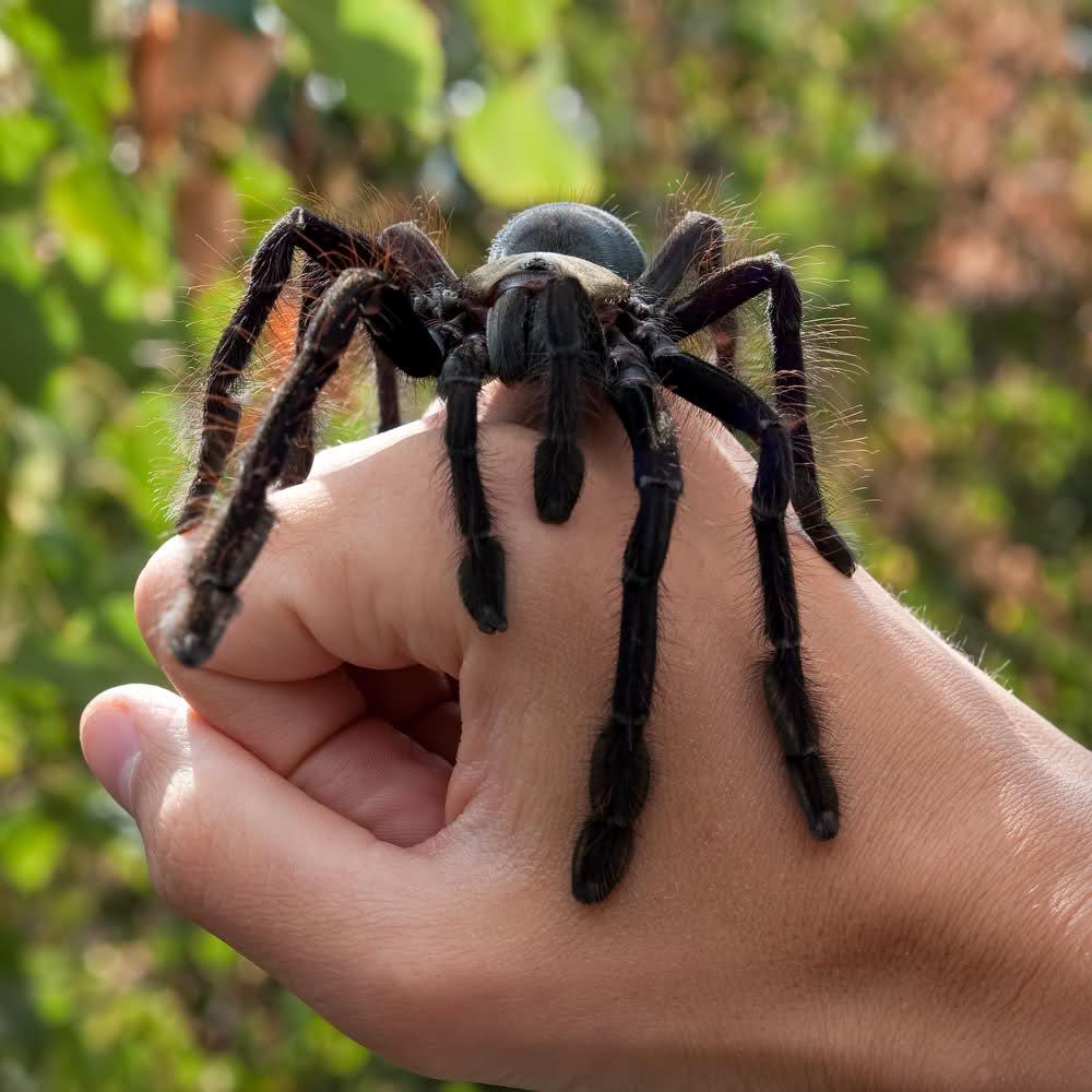 фото пауков с названиями