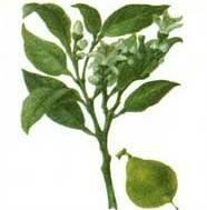 Бергамот аромашарм