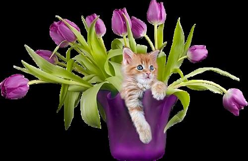 котик в тюльпанах