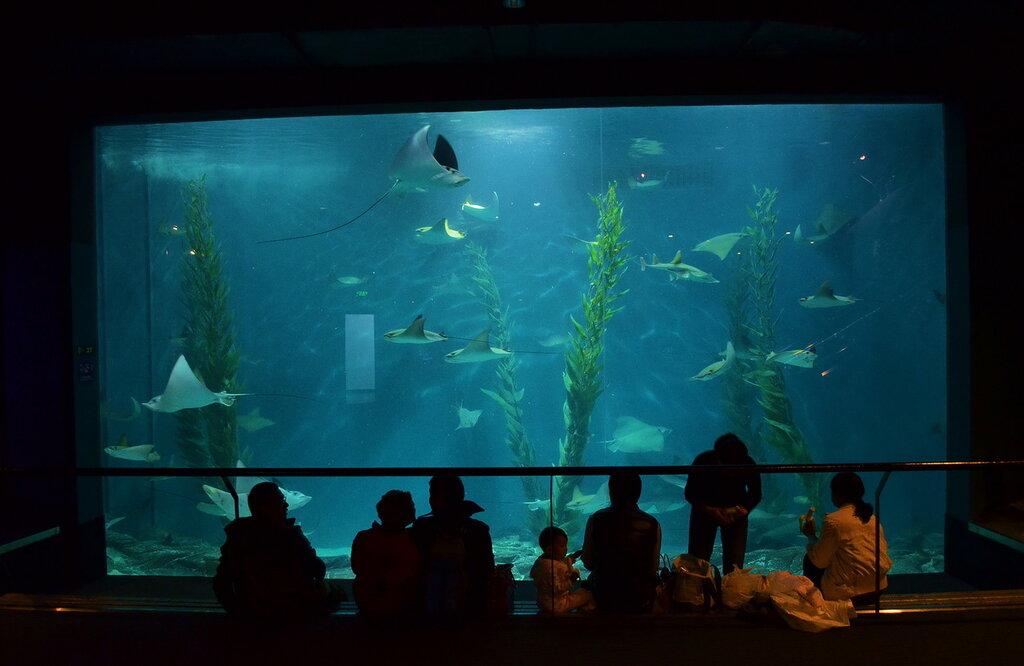 Фото 5. Отзыв об экскурсии в океанариум Шанхая во время путешествия по Китаю самостоятельно. Скаты (фотоаппарат Nikon D5100 KIT 18-55; Время экспозиции 1/30 секунды. Апертура f/3.5. ФР=18 мм. ИСО 1600)