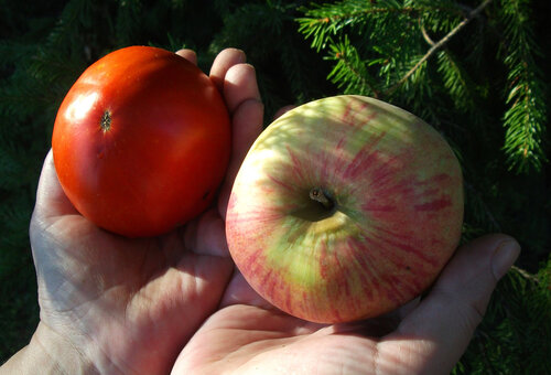 Помидор и яблоко