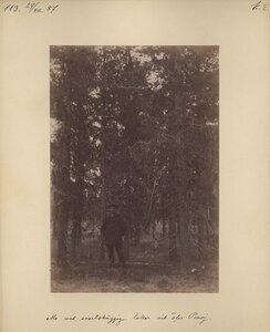 27.8.1887 в 6.40, облачно, возможны осадки. Борода лишайника на соснах возле монастыря на реке Поной