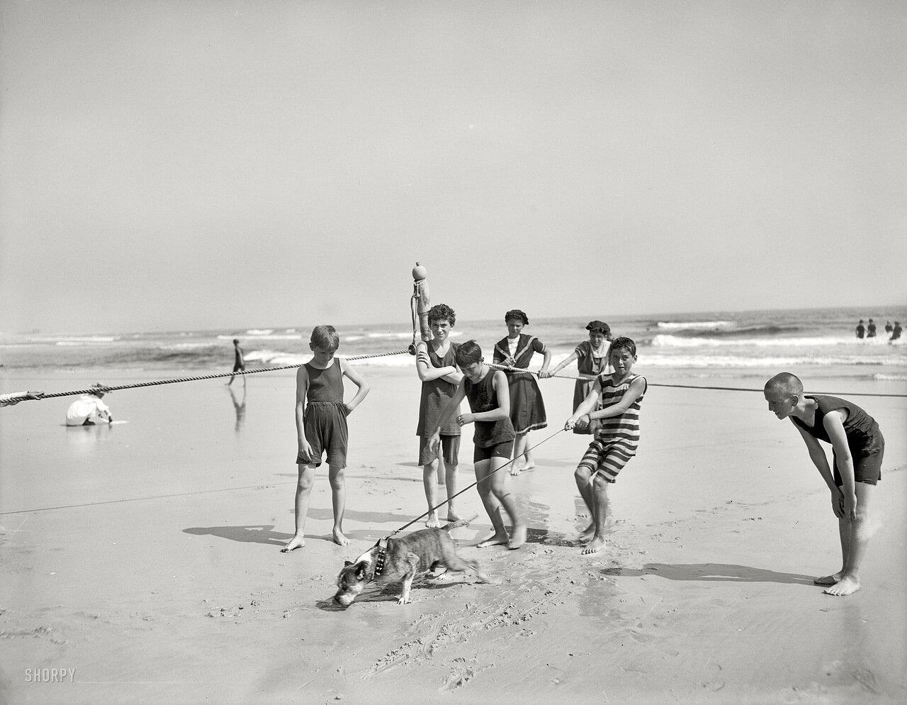 1905. Собака на пляже