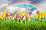 Tulips (11).jpg