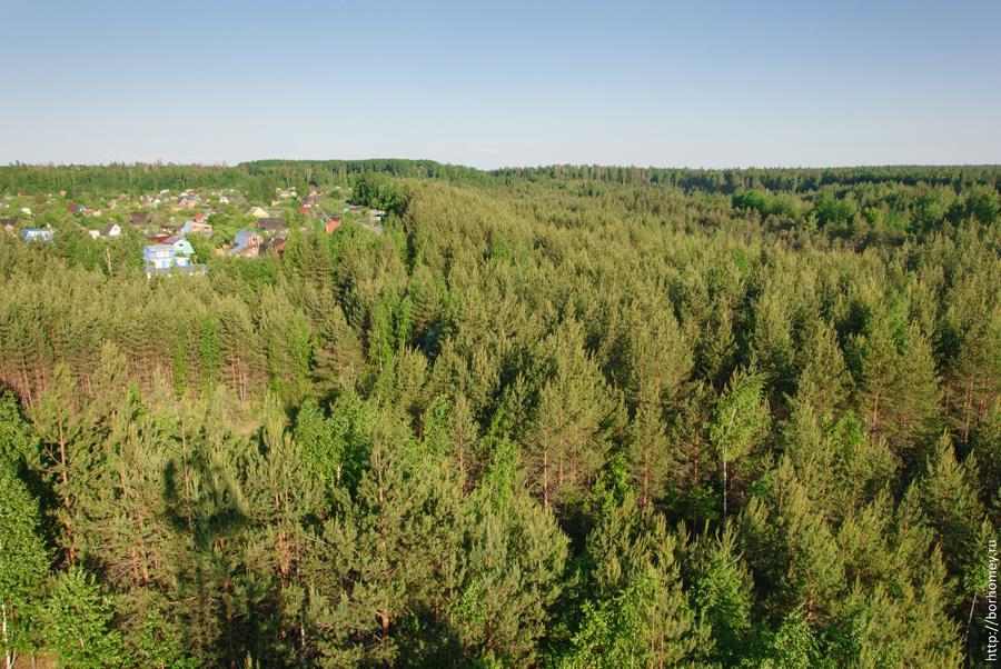 сосновый лес с высоты