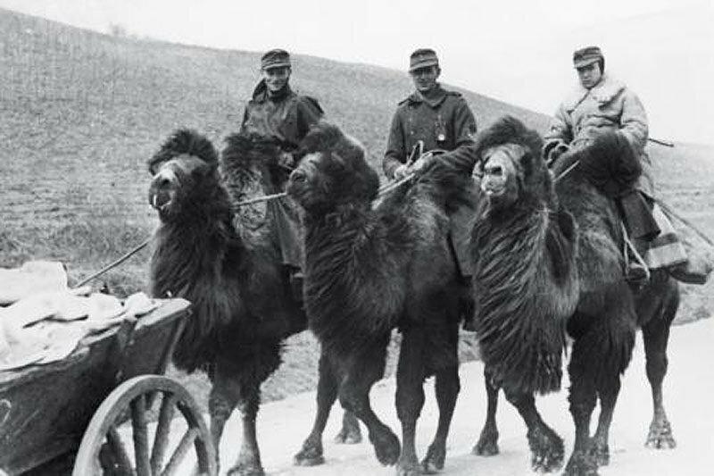 Северный кавказ: нацисты на верблюдах, 1942