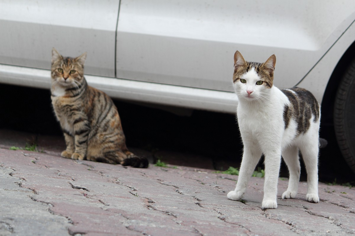 Стамбульские ошки