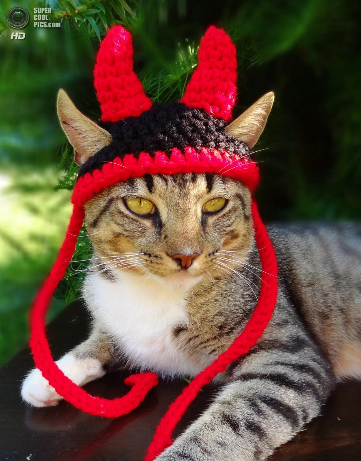 Шапка для котов своими руками