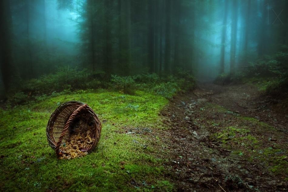 Таинственные леса со всего мира, которые ужасны и прекрасны одновременно