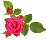 RR_MemoriesOfMom_RoseGarden_Element (45).png