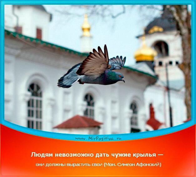 позитивчик дня: Людям невозможно дать чужие крылья — они должны вырастить свои (Мон. Симеон Афонский)