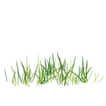 Bush and Grass  (134).png