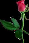 Holliewood_RoseIsARose_Rose14.png