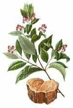 сандаловое дерево аромашарм