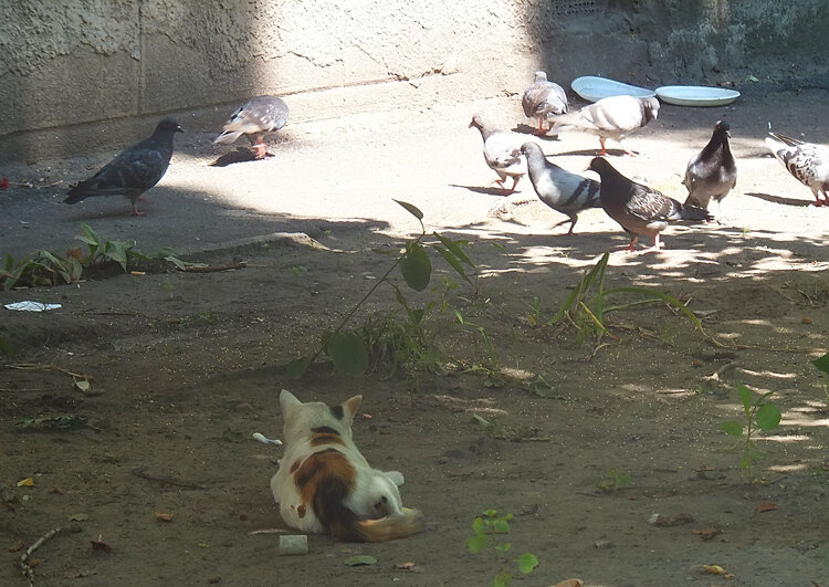 это мои птицы!