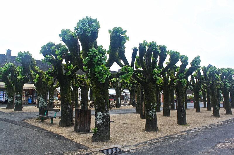 Деревья замка Шамбор.