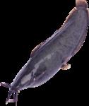 рыба (72).png