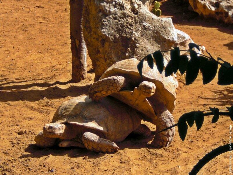 Порно людей с черепахами
