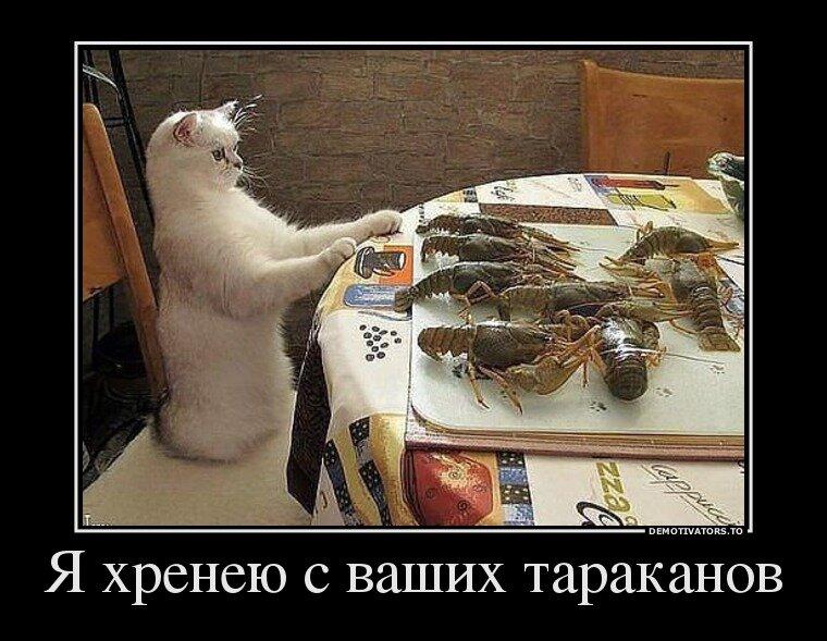 http://img-fotki.yandex.ru/get/9115/13005426.82/0_b7fd6_8b2b1158_XL.jpg