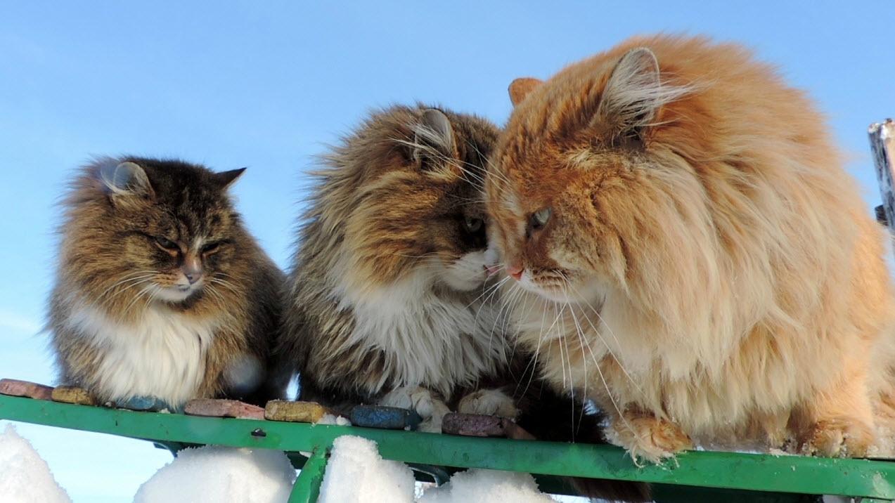 Фото Аллы Лебедевой