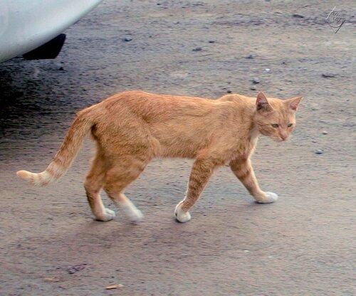 Рыжий кот расстроен