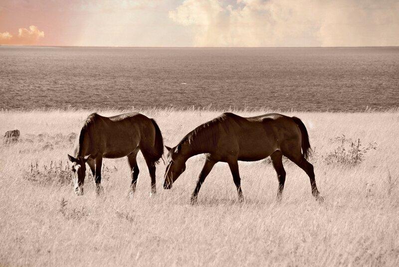 Мир, где пасутся дикие лошади - 2