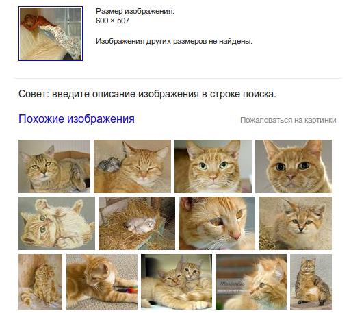 котики гугл