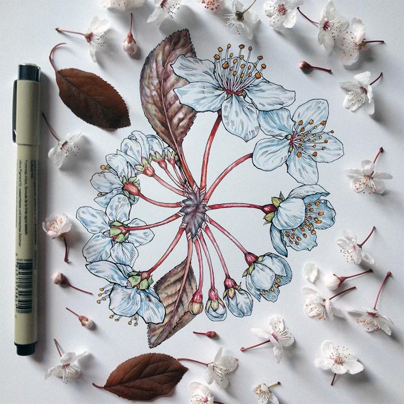 Коллаж из полевых цветов